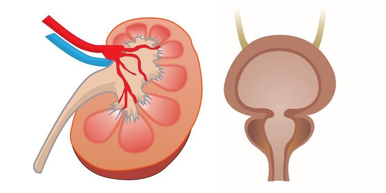前立腺の病気
